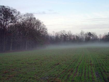 farm420.jpg